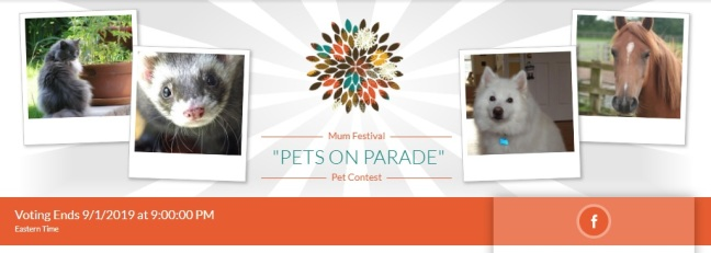 Pets On Parade 2019